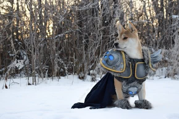 Vox the Dog - der neue Cosplay König